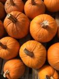 dizzy pumpkins
