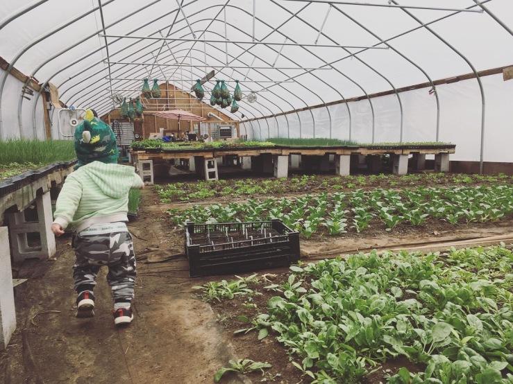 harvey in greenhouse