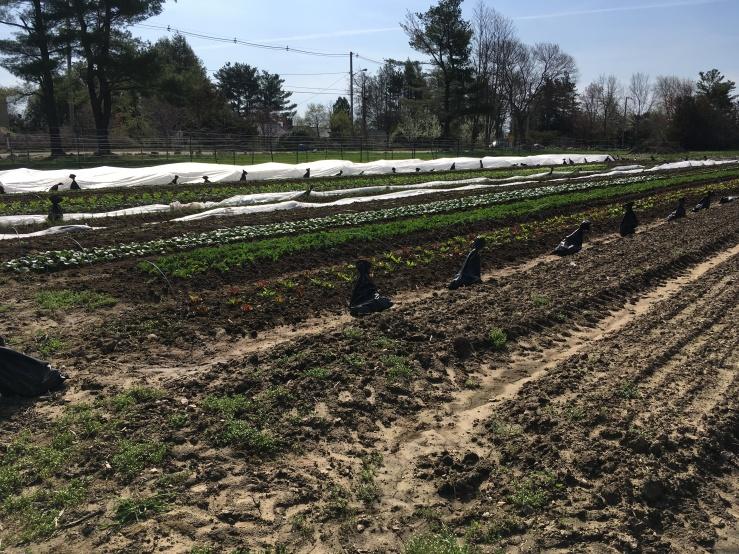 spring fields 2018