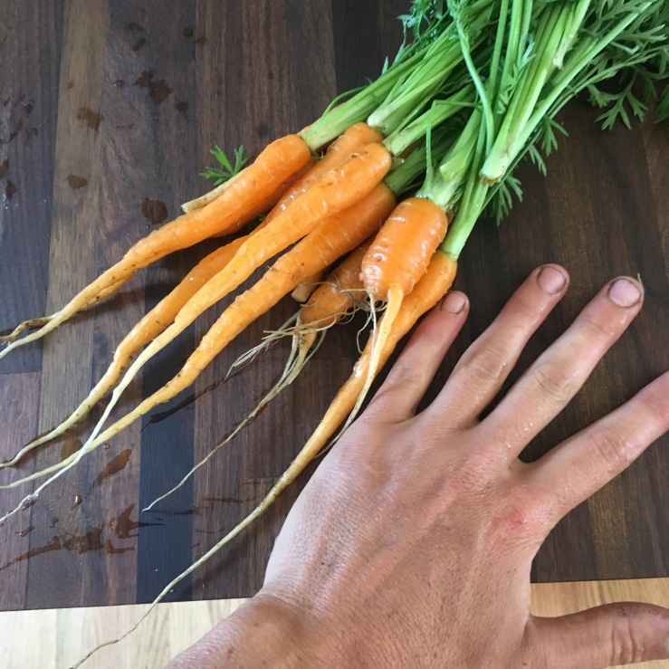 small carrots june